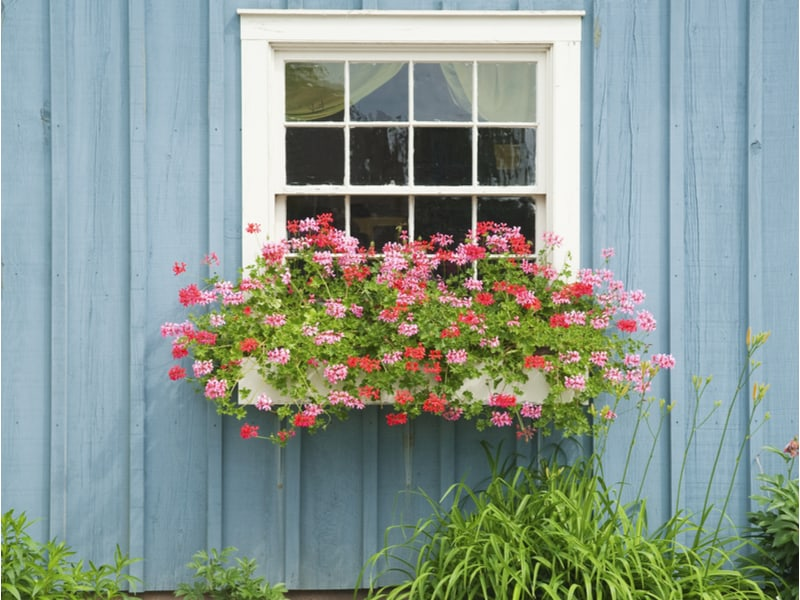 5 Easy Steps to Hang Window Boxes