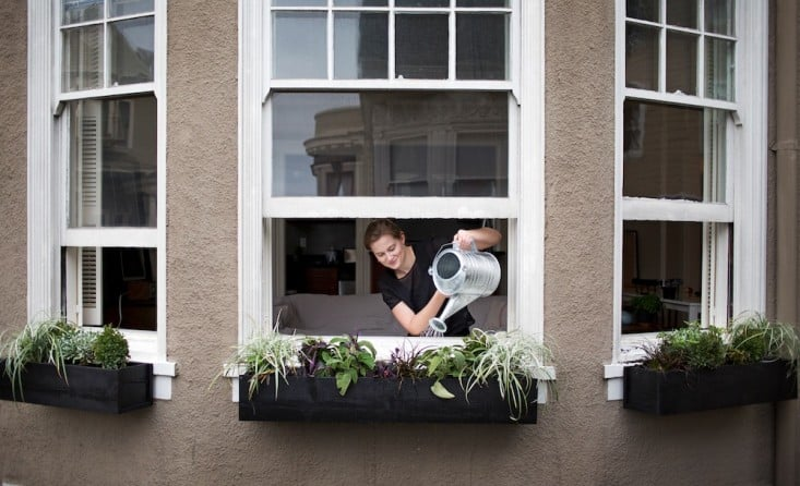 DIY Window Boxes Build It Yourself for a Perfect Fit
