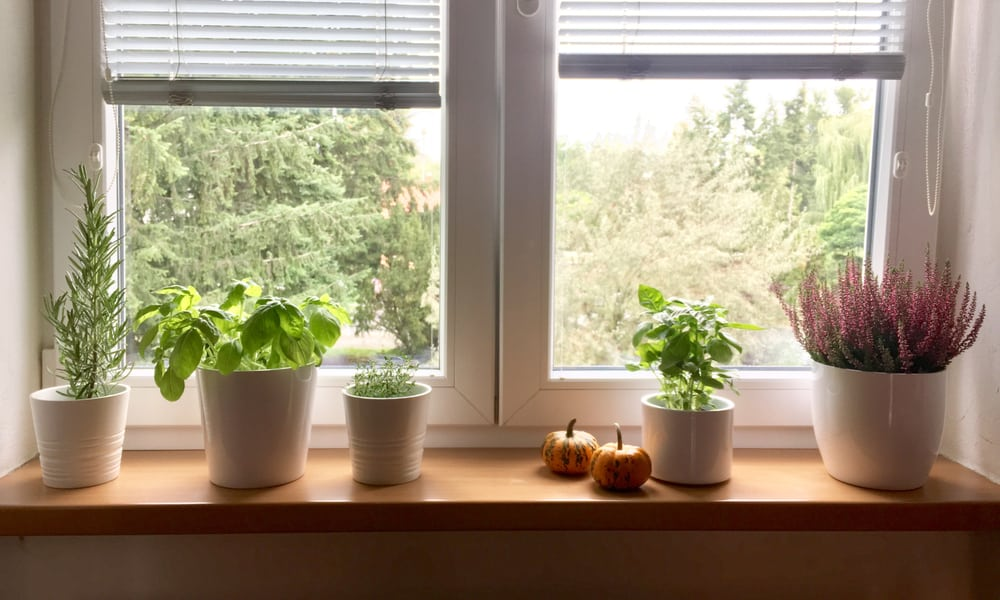 Window Sill Everything You Need to Know