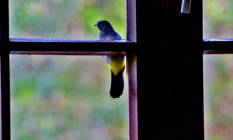 4 Spiritual Meanings of Bird Knocking on Window