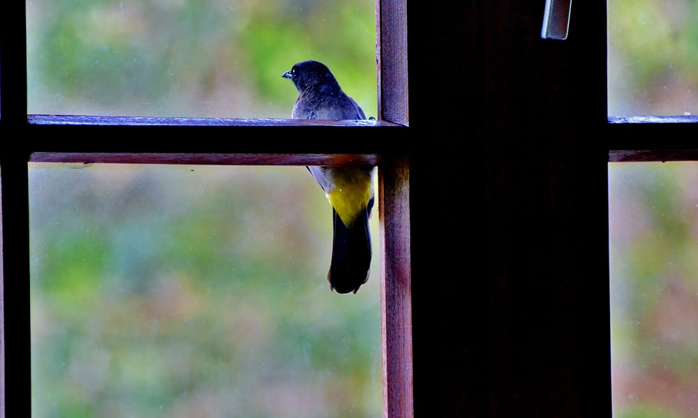 4 Spiritual Meanings of Bird Knocking on Window