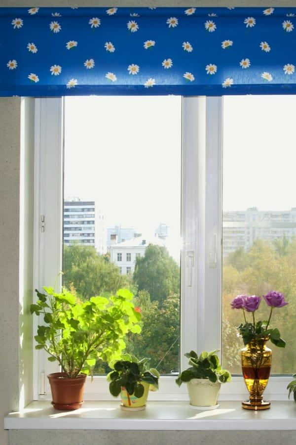 Low-E Windows and Plants