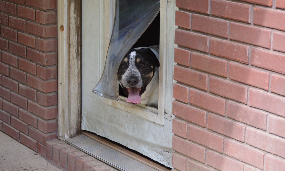 6 Easy Steps to Install a Doggie Door
