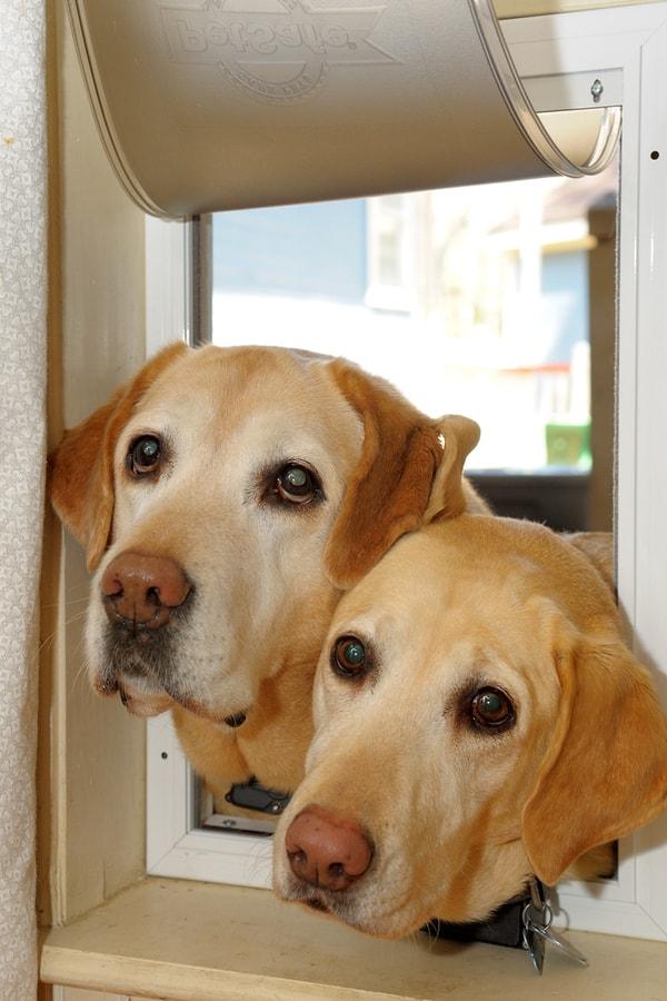 A Homemade Pet Door