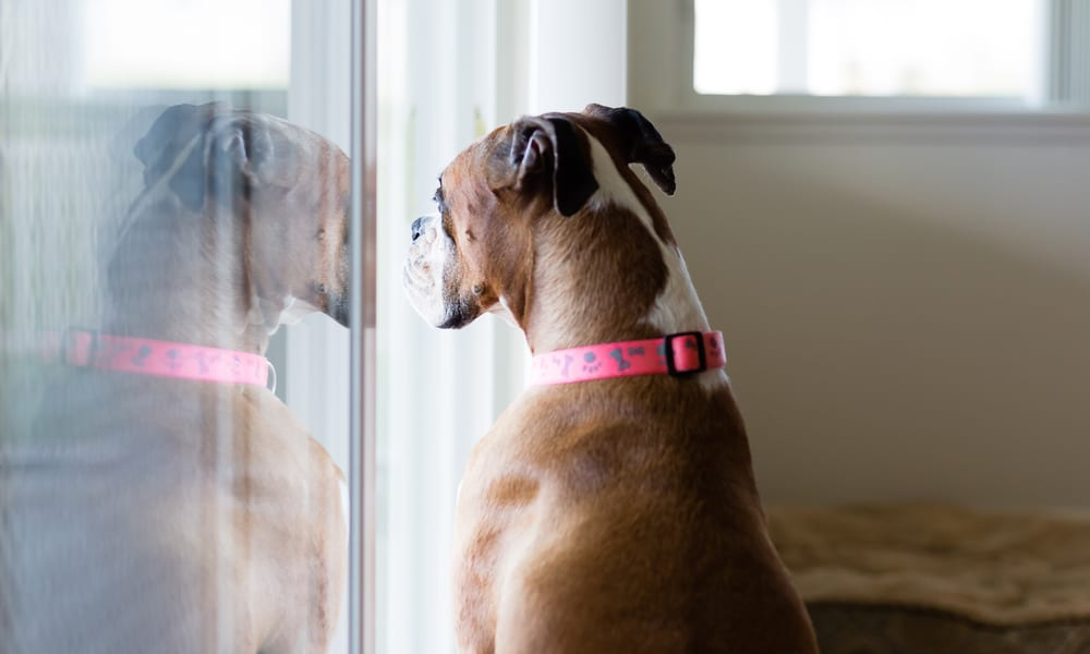 Best Dog Door for your Sliding Glass Door