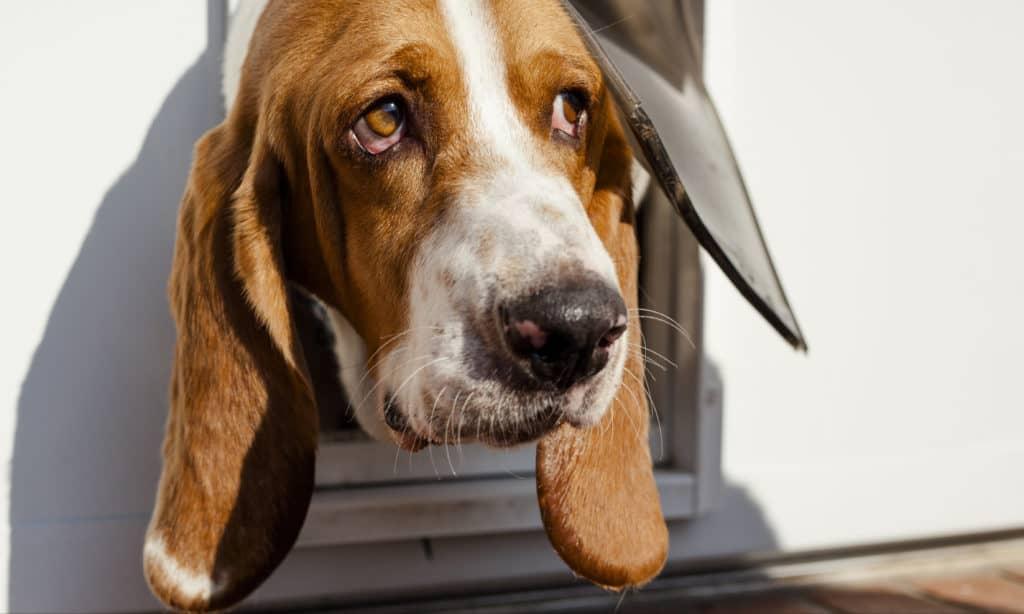 Design Your Own DIY Doggie Door