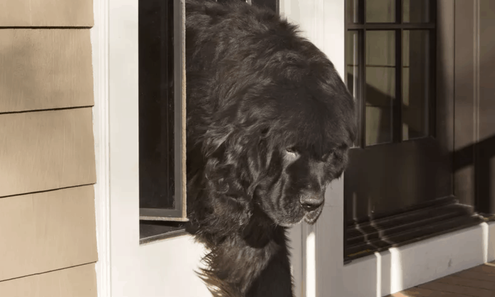 How to Build Your Own Large Pet Door