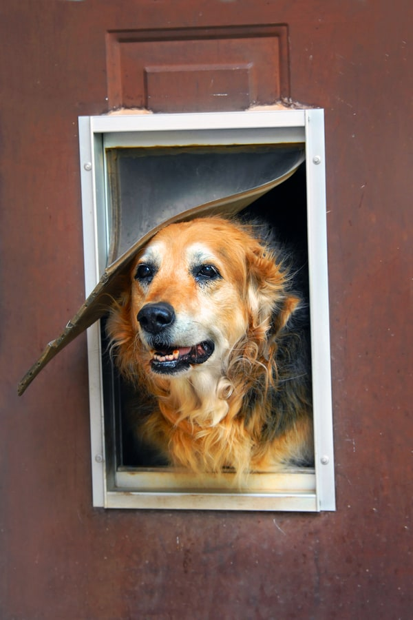 How to Make Your Own Doggie Door