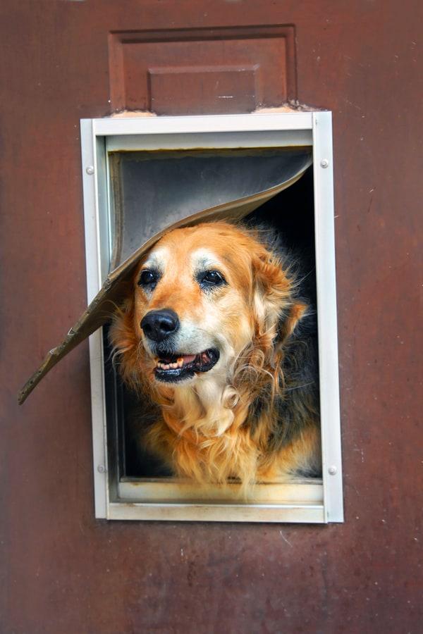How to Make Your Own Doggie Door