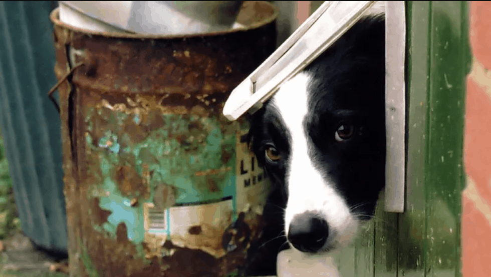 Install a through-wall dog door