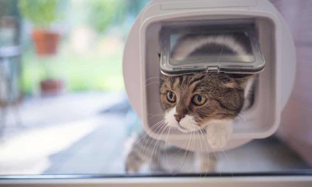 window cat door
