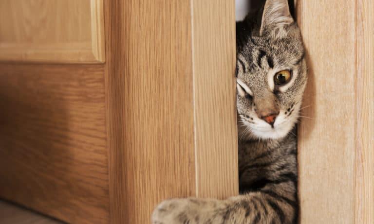 6 Ways to Stop Cat from Scratching Door
