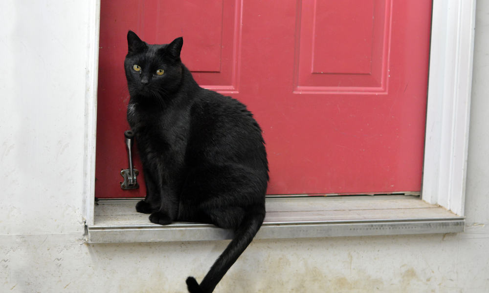Reasons Why A Cat May Appear At Your Door