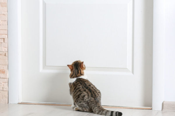 What Does It Mean When A Cat Shows Up At Your Door?
