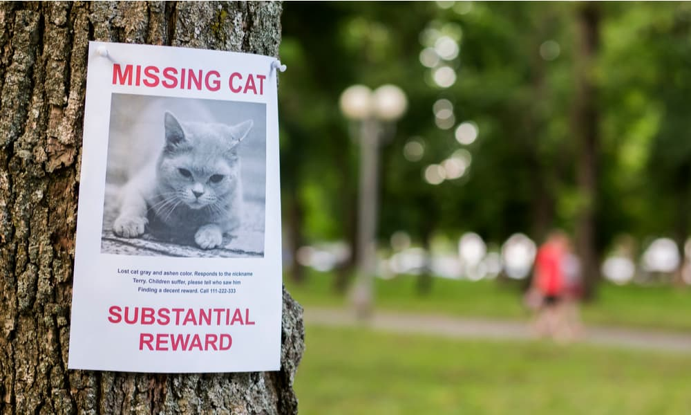 Find out if the cat is missing
